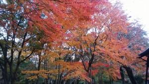近くて遠い場所・名勝旧彦根藩松原下屋敷「お浜御殿」庭園