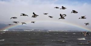 2月6日に琵琶湖で撮影された虹の架け橋