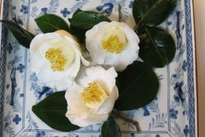 庭の白玉椿